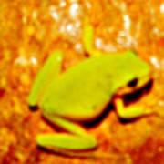 Frog On The Wall Art Print