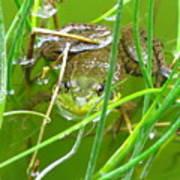 Frog Playing Hide N Seek Art Print