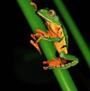 Frog Pole Vault  Art Print