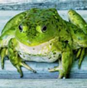 Frog Portrait Art Print