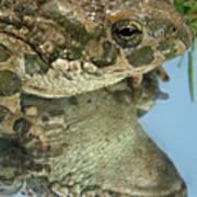 Frog Reflection Art Print