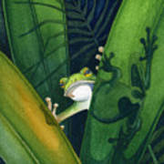 Frog Small Peek Art Print By Lyse Anthony