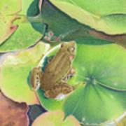 Froggie Art Print by Elizabeth Dobbs
