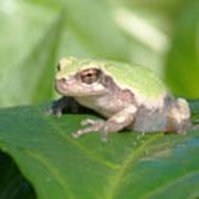 Froggie In The Pepper Patch Art Print