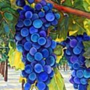 From The Vineyard Art Print