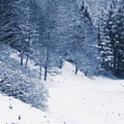 Frost Path Art Print
