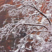 Frosted Branches Art Print
