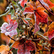 Frosted Fall Art Print