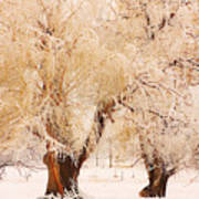 Frosted Golden Trees Art Print