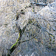 Frosted Limbs Art Print