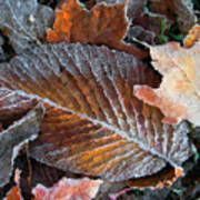 Frosted Painted Leaves Art Print