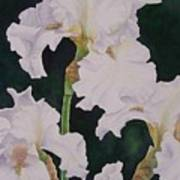 Frosted Pearl Iris Art Print