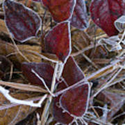 Frosted Red Green Briar Art Print