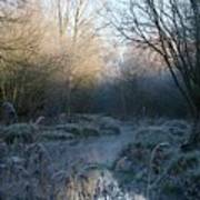 Frosted Riverbank Art Print