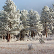 Frosty Pikes National Forest Art Print