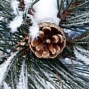 Frosty Pine Cone Art Print