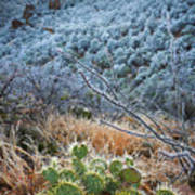 Frosty Prickly Pear Art Print