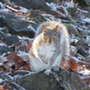 Frosty Squirrel Art Print