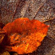 Frozen Leaf Art Print