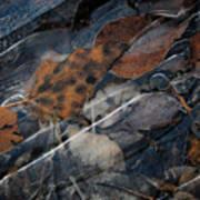 Frozen Leaves In Fall Art Print