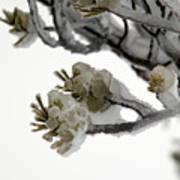 Frozen Pines 1 Art Print