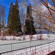Frozen Pond / Chicago Botanic Garden Art Print