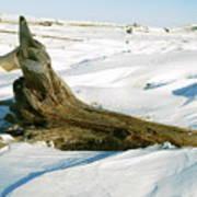 Frozen Shores Art Print