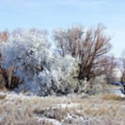 Frozen Trees By The Lake Art Print