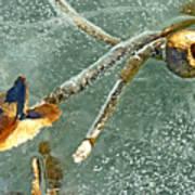 Frozen Water Lily Art Print