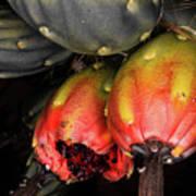 Fruit Is The Star Art Print