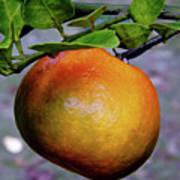 Fruit On The Tree Art Print