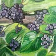 Fruit On The Vine Art Print