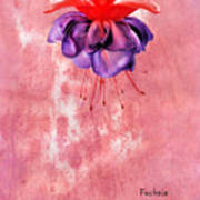 Fuchsia Blue Eyes Art Print