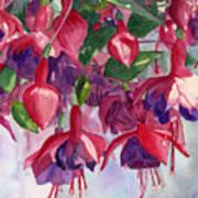 Fuchsia Frenzy Print by Lynne Reichhart