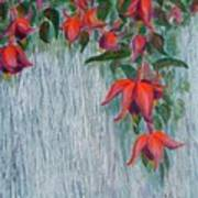 Fuchsia On The Fence Art Print