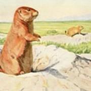 Fuertes, Louis Agassiz 1874-1927 - Burgess Animal Book For Children 1920 Prairie Dog Art Print
