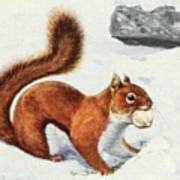 Fuertes, Louis Agassiz 1874-1927 - Burgess Animal Book For Children 1920 Red Squirrel Art Print