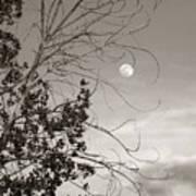 Full Moon Behind Cottonwood Tree Art Print