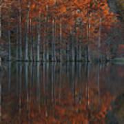 Full Of Glory - Cypress Trees In Autumn Art Print