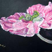 Fully Open Poppy Art Print