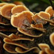 Fungal Beauty Art Print