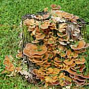 Fungus Bouquet Art Print