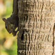 Funky Ear Squirrel Art Print