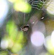 Funky Spider Art Print