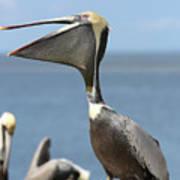 Funny Brown Pelican Art Print