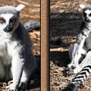 Funny Lemurs Art Print