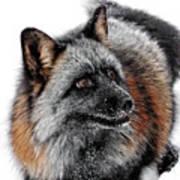 Funny Little Furry Face Art Print