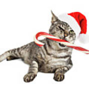 Funny Santa Cat With Candy Cane Art Print