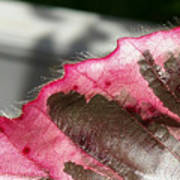 Furry Leaf Art Print