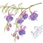 Fuschia Flowers Art Print